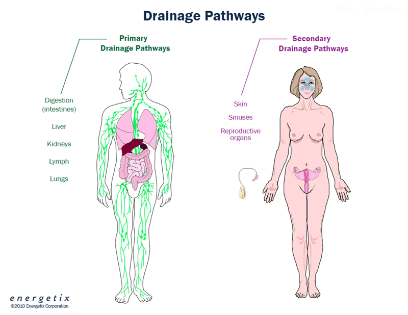 Functional Medicine - Detox Pathways