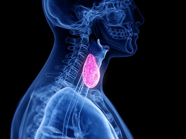 thyroid and functional medicine
